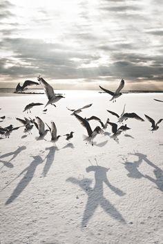~ Navid Baraty, Winter on Coney Island