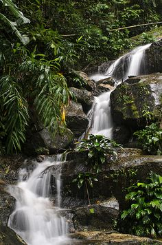 Tijuca National Park, Rio de Janeiro state, Brazil