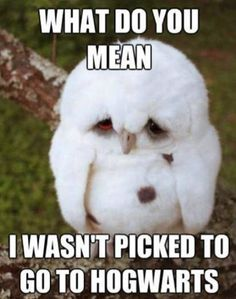 Owl by myself...don't wanna be owl by myself... :(