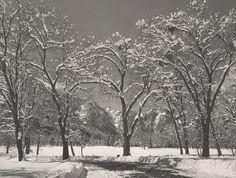 ANSEL ADAMS  1902 - 1984 Winter, Yosemite Valley