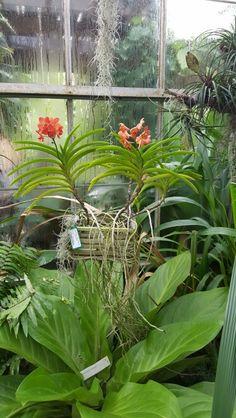 Marie Selby Botanical Gardens in Sarasota, FL