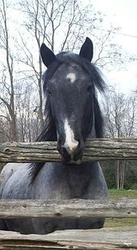 Horse named Hoss! Horse Names, Picts, Horses, Animals, Animales, Animaux, Horse, Words, Animal