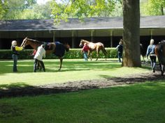 The horses who are about to enter the race are introduced to the public.