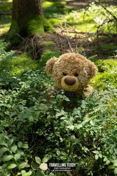 Teddy Bear Party, Cute Teddy Bears, Teddy Bear Images, Charlie Bears, Good Morning Gif, Disney Tangled, Fun To Be One, Belle Photo, Needle Felting