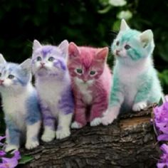 Ahhh, Spring chickens, I mean kittens! ( from Colours of Life)