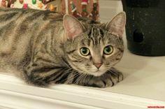I Am Watching You - http://cutecatshq.com/cats/i-am-watching-you/