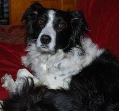 My Dog: Lady's Story - Dreya's World