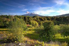 Verdor primaveral - Reserva Nacional Llanquihue (Patagonia - Chile)