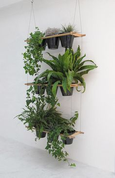 Hanging indoor plants.
