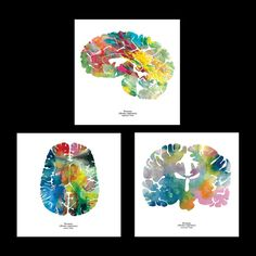 The human brain is a powerful and mysterious organ. I appropriate neurological images to create the intricate shapes of the human brain with my