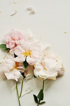 Odessa May Society: blooming | fading peonies
