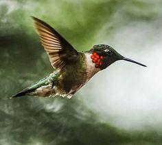 This bird is wonderful~~☆★♡♥