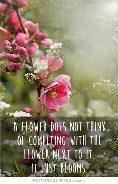 A flower does not think of competing with the flower next to it. It just blooms. Picture Quotes.