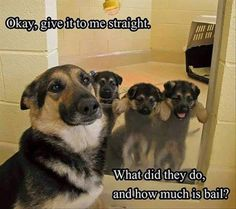 22 Funny Animal Pictures for Your Tuesday - Funny, meme #funnydogmeme
