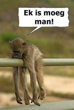 Funny Signs, Funny Memes, Jokes, African Quotes, South Afrika, Afrikaanse Quotes, My Family History, Good Night Quotes, Morning Quotes