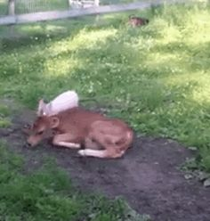 Calf And Piglet Spark Lifelong Friendship With Cutest Cuddle Puddle