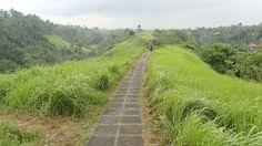 Rice field walk, Ubud.