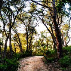 Rincones para compartir, contigo... pista forestal desde Cap Roig hasta Cala Castell, al atardecer! ;) #contigomismo #contigo #amor  #rinconessingulares #sentir  #compartir #nofilter #instagramers #thebestphoto #cataluña #sinfiltro #instagood  #instagram #insta #photography #photo #thebest #catalunya #empurda #calella  #catalunyaexperience #countryside #conmigomismo #sunset #atardecer #daybreak http://tipsrazzi.com/ipost/1508209957986923061/?code=BTuPPdIhHI1