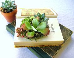 DIY+Succulent+Centerpiece+Vintage+Book+by+RootedInSucculents,+$40.00