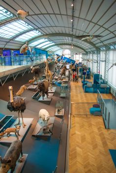 Museum of Natural Science, Brussels, Belgium