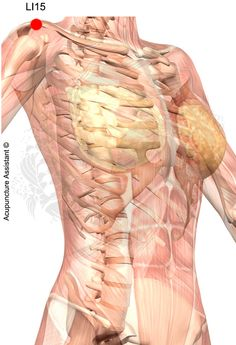 Human organs diagram back view health and wellbeing pinterest point localization between the deltoids and the anterior aspect of the acromion tcm actions ccuart Images