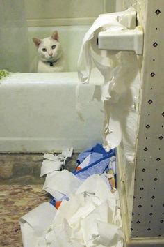 """the toilet paper started it!!"""