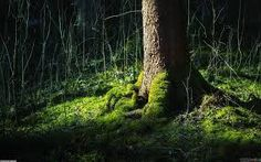 Image result for forest germany