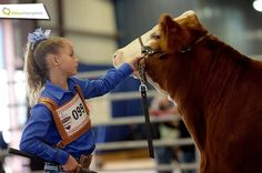 livestock judging market steers evaluation essay
