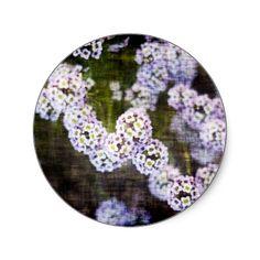 Sweet Alyssum in Grunge Round Sticker #gift #zazzle #Christmas #photogift