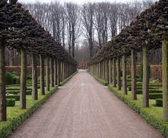 espalier | espalier, pleached and pollarded trees