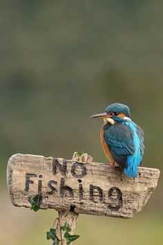 King Fisher .... perfect shot