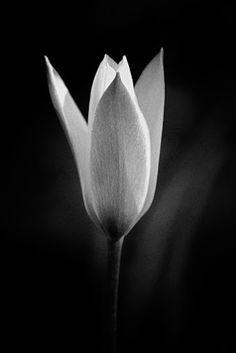 Jack the Flipper - Flower 1 | Flora #photography   #nature   #naturephotography   #naturephotos