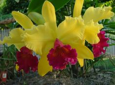 I Love orchids! Exotic Flowers, Amazing Flowers, Orchid Flowers, Special Flowers, Unusual Plants, Tropical Plants, Yard Art, Garden Inspiration, Houseplants