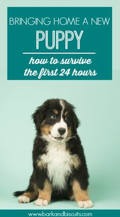 Dogs New Puppy Guide - How to survive the first 24 hours - Bringing home a new puppy is exciting but it can also be unnerving. This guide will help you get through the first 24 hours with ease. Training, must-have. Puppy Training Tips, Training Your Dog, Potty Training, Training Schedule, Training Videos, Training Classes, Dog Training Books, Dog Training Courses, Training Pads