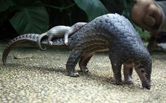 Pangolin - http://i.telegraph.co.uk