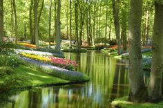 Keukenhof | GeoTagged Fly to this location (requires Google … | Flickr - Photo Sharing!