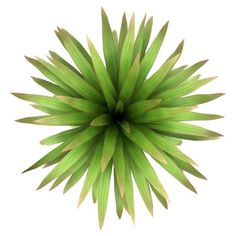 plants top view: top view of mountain cabbage palm tree isolated on white background (Top View Furniture) Tree Plan Png, Trees Top View, Free Plants, Color Plan, Tree Silhouette, Plant Illustration, Tree Tops, Autocad, Native Plants