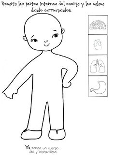órganos internos del cuerpo más reales Health Fair, Kids Health, K 1, Body Image, Blogger Themes, Kids Education, Coloring Pages, Activities For Kids, Kindergarten
