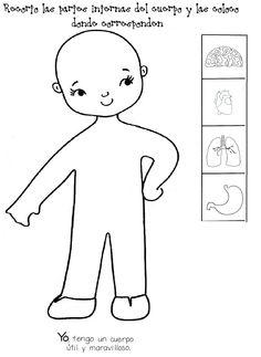 órganos internos del cuerpo más reales