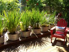 Inexpensive idea for outdoor privacy: Galvanized buckets with tall grass. Keeps the grass from spreading into the surrounding yard areas.