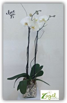 #FloreriaZazil #floreriaencancun Orquideas phanelopsis www.floreriazazil.com