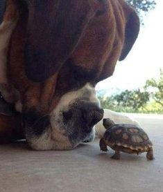 Kiss, kiss.