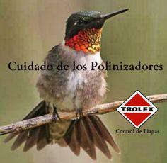 Pesticidas y Polinizadores - Trolex ¿Quiénes son los polinizadores y por qué es importante cuidar de ellos al aplicar químicos pesticidas?