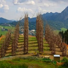 Vegetable cathedral, Italy