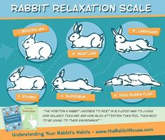 Bunny Relaxation Scale