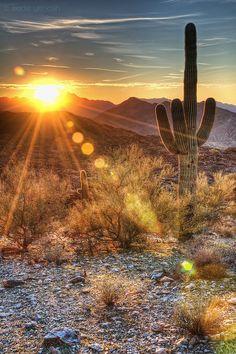 Desert Sunset . Arizona