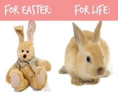 <3 A friendly reminder about Easter bunnies ♥ PLEASE don't give animals as gifts! <3
