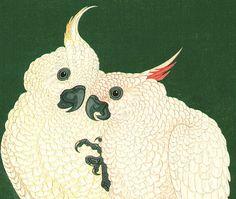 Ohara Koson - crested cockatoos!