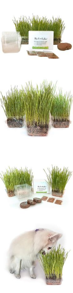 Seeds  =^..^= Rye 1 lb Great for Digestive System Organic Cat Grass Seeds