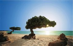 Aruba | Caribe